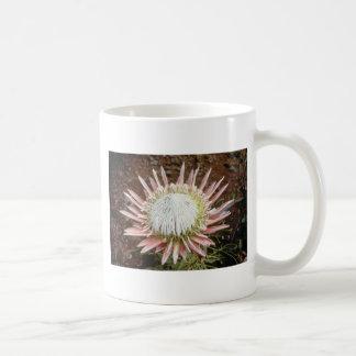 white King protea (Protea cynaroides) flowers Coffee Mug