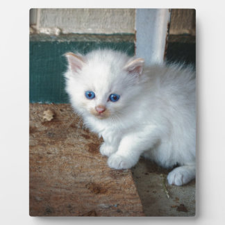 White Kitten Plaque