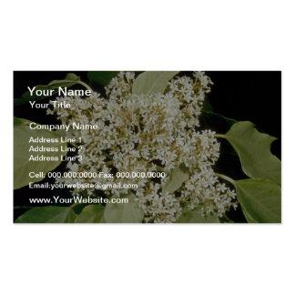 white Kukui nut (Aleurites moluccana) flowers Business Card Template