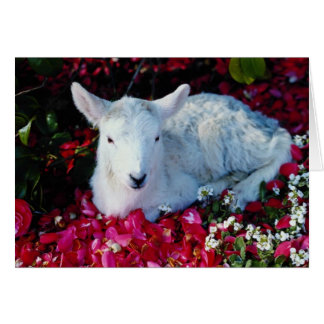 White Lamb in springtime, England flowers Card