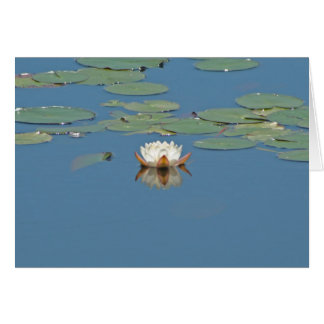 White Lilly Pad Card