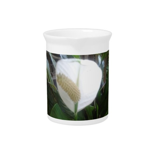 white lily bloom pitcher
