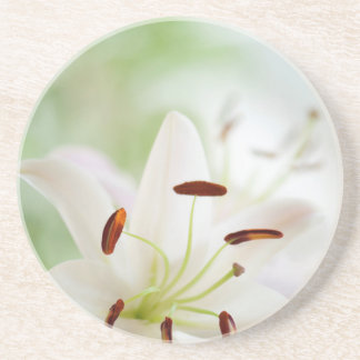 White Lily Flower Fully Open Coasters