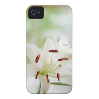 White Lily Flower Fully Open iPhone 4 Cases
