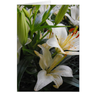 White lily flowers blank greeting card cards