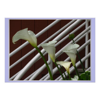 White Lily Flowers Poster