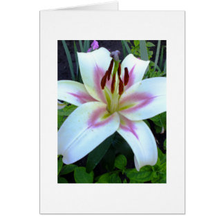 White Lily Royal Greeting Card Add Your Own Text