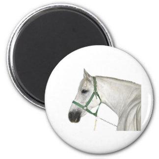 White Lipizzaner Horse 6 Cm Round Magnet
