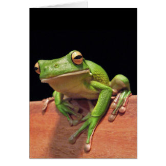 White-lipped Tree Frog Greeting Card
