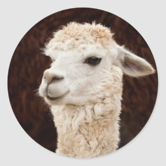 White Llama Classic Round Sticker