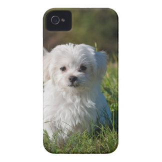 White Long Coated Dog on Grassland iPhone 4 Cover