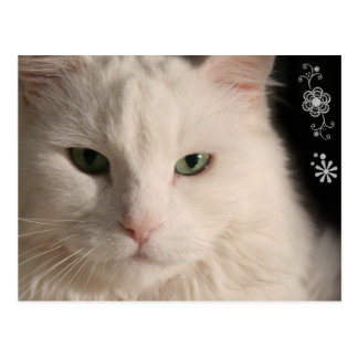 White Long-haired Cat postcard