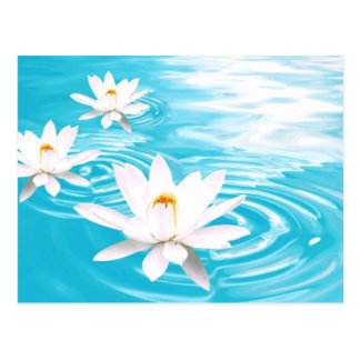 White Lotus plants floating on turquoise water zen Postcard
