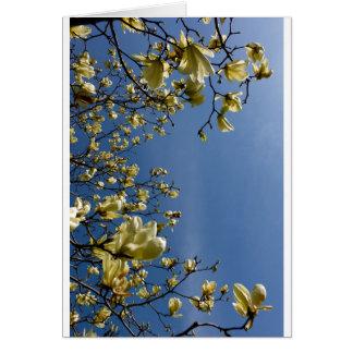 White Magnolia Blossoms in Boston Public Garden Greeting Card