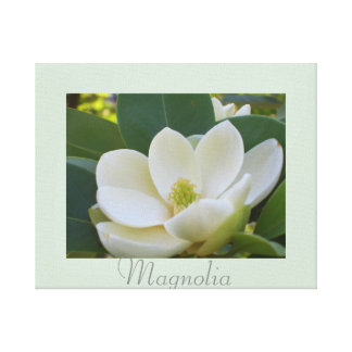 White Magnolia Flowers Art Nature Photography Canvas Print