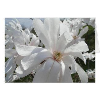 White Magnolia, Springtime Card