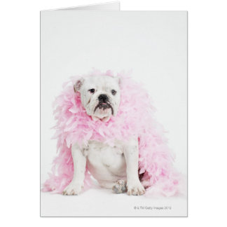 White male dog with pink boa card