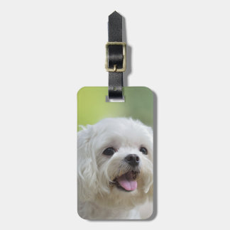 White Maltese Dog Luggage Tag