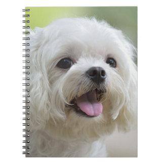 White maltese dog sticking out tongue notebooks
