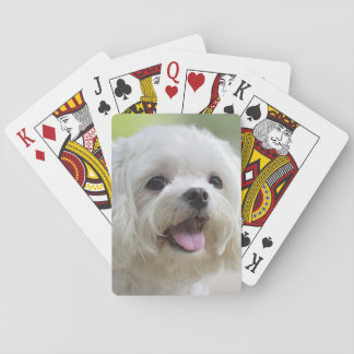 White maltese dog sticking out tongue playing cards