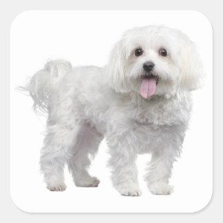 White Maltese Puppy Dog Love Sticker / Label