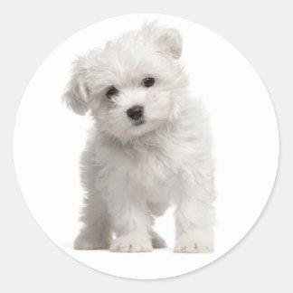 White Maltese Puppy Dog Sticker / Label