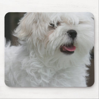 White Maltese Puppy Mouse Pad