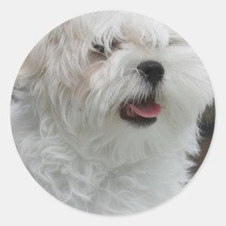 White Maltese Puppy Sticker