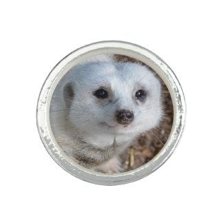 White Meerkat Closeup Ladies Silver Round Ring. Ring