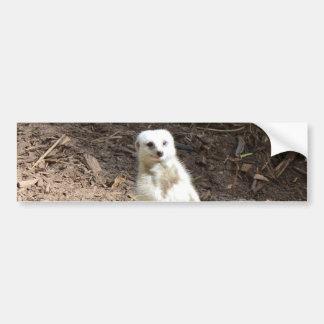 White_Meerkat_Grins,_Bumper_Sticker. Bumper Sticker