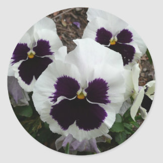 White mixed pansy classic round sticker
