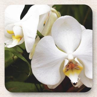 White Moon Orchid (Phalaenopsis Aphrodite) Drink Coaster