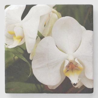 White Moon Orchid (Phalaenopsis Aphrodite) Stone Beverage Coaster