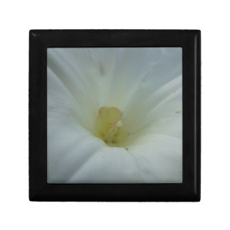 White morning glory center small square gift box