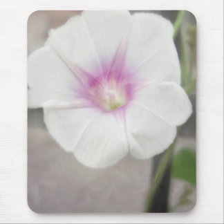White Morning Glory - Love Eternal Mouse Pad