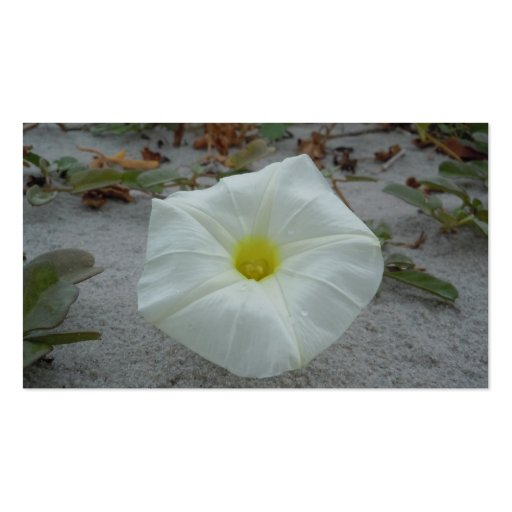 White Morning Glory on the Beach Business Cards
