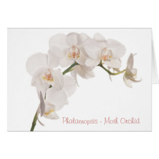 White Moth Orchid Greeting Card