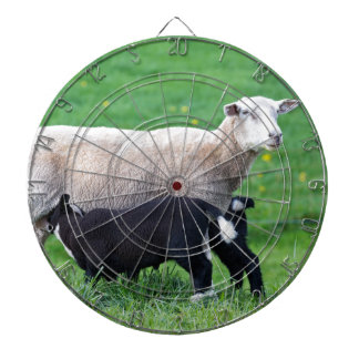 White mother sheep with two drinking black lambs dartboards