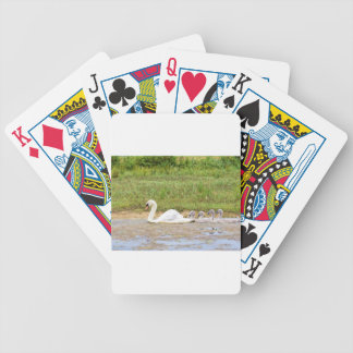 White mother swan swimming in line with cygnets bicycle playing cards