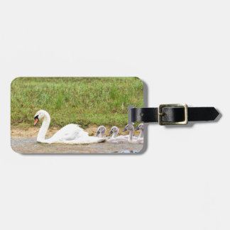White mother swan swimming in line with cygnets luggage tag