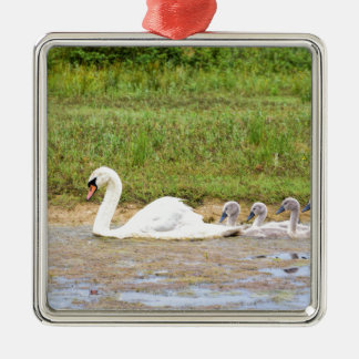 White mother swan swimming in line with cygnets metal ornament
