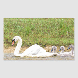 White mother swan swimming in line with cygnets rectangular sticker