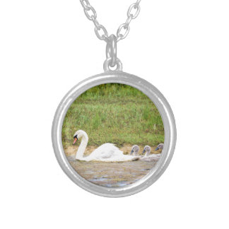 White mother swan swimming in line with cygnets silver plated necklace