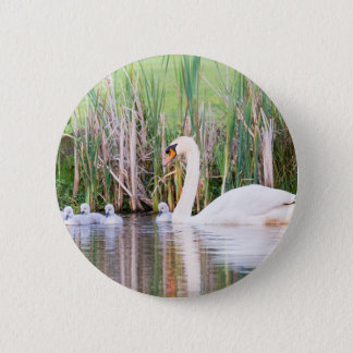 White mother swan swimming with chicks 6 cm round badge