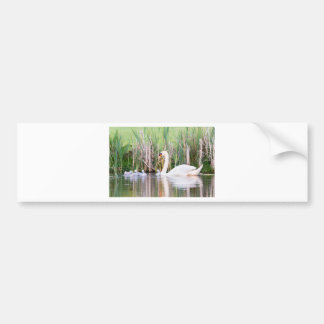 White mother swan swimming with chicks bumper sticker