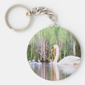 White mother swan swimming with chicks key ring