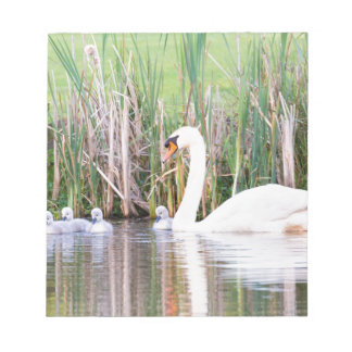 White mother swan swimming with chicks notepad