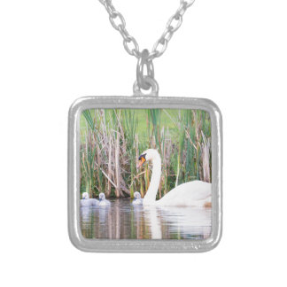 White mother swan swimming with chicks silver plated necklace