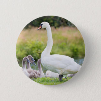 White mother swan with young chicks 6 cm round badge