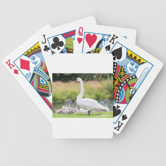 White mother swan with young chicks bicycle playing cards